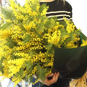 一種類の花をたくさん