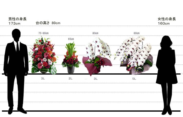 ビジネス花商品サイズ