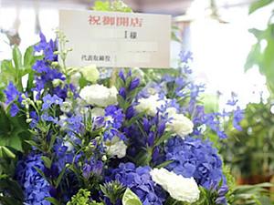 胡蝶蘭か生花か