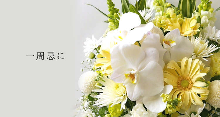 ポピー(花の丘)